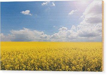 Endless Yellow Canola Field Wood Print by © Bjorn van der Meijs