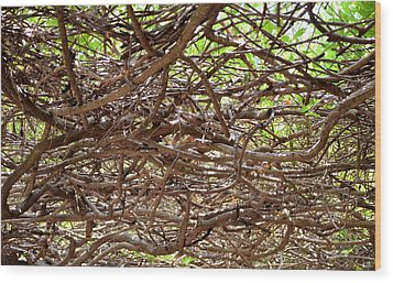 Entangled Wood Print by Maria Urso
