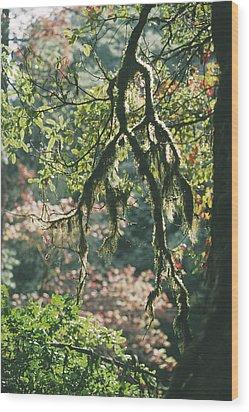 Epiphytic Moss Wood Print by Doug Allan