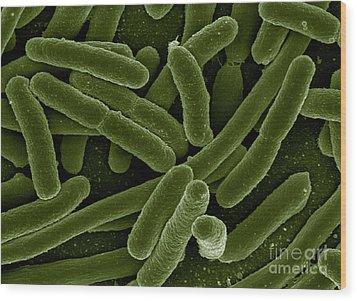 Escherichia Coli Bacteria, Sem Wood Print by Science Source