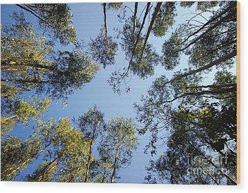 Eucalyptus Wood Print by Carlos Caetano