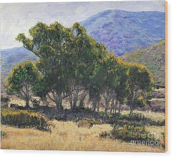 Eucalyptus Grove Catalina  Wood Print by Randy Sprout