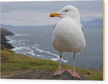 European Herring Gull Larus Argentatus Wood Print by Trish Punch