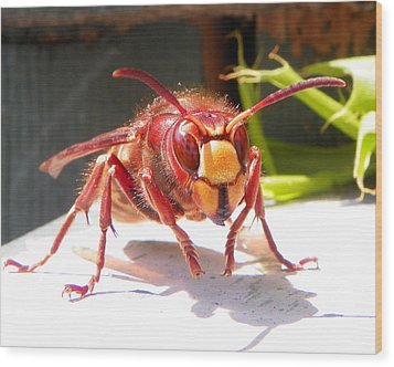Wood Print featuring the photograph European Hornet by Chad and Stacey Hall