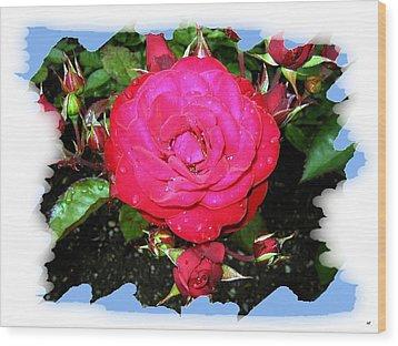 Europeana Roses And Raindrops Wood Print by Will Borden