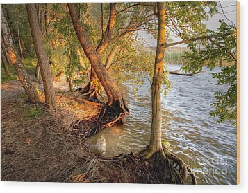 Evening At The Lake Wood Print by Heiko Koehrer-Wagner