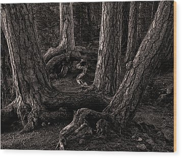 Evening Pines Wood Print