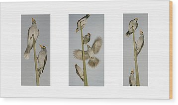 Evening Song Birds Trio Wood Print