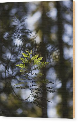 Evergreen Light Wood Print by Mike Reid