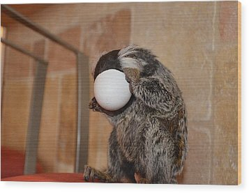 Evolution Of The Motorcycle Helment Chewy The Marmoset Wood Print by Barry R Jones Jr