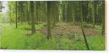 Exmoor Forest Wood Print