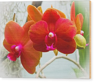 Exotic Orchids Wood Print by Colleen Kammerer
