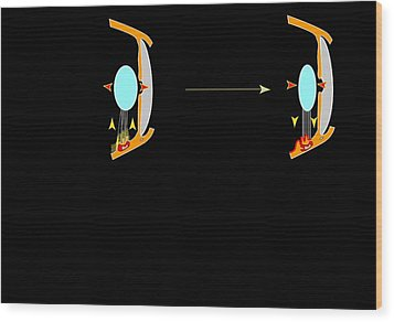 Eye Lens And Accommodation, Artwork Wood Print by Francis Leroy, Biocosmos