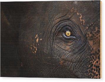 Eye Of Thai Elephant Wood Print by presented by Zolashine