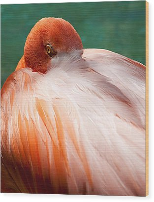 Eye Of The Flamingo Wood Print by Steven Heap