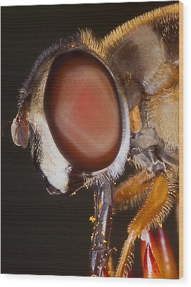 Eye Of The Fly Wood Print