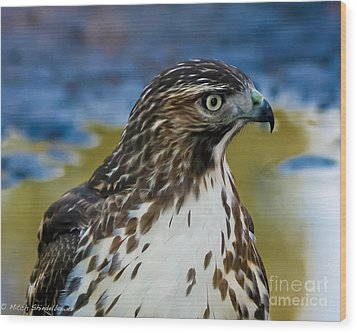 Wood Print featuring the photograph Eye Of The Hawk by Mitch Shindelbower