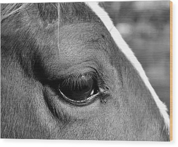 Eye Of The Horse Black And White Wood Print by Sandi OReilly