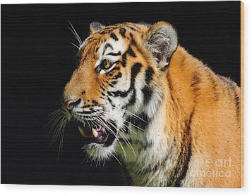 Eye Of The Tiger Wood Print by Holger Ostwald