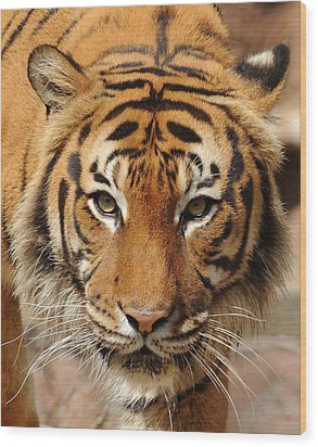 Wood Print featuring the photograph Eye Of The Tiger by Renee Hardison