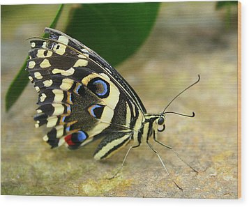 Wood Print featuring the photograph Eye To Eye With A Butterfly by Laurel Talabere