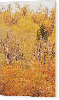 Eyeful Of Color Wood Print by Bob and Nancy Kendrick