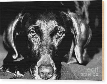 Wood Print featuring the photograph Eyes by Leslie Leda