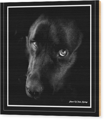 Eyes Of His Heart Wood Print by Sherri's Of Palm Springs