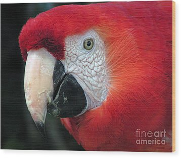 Wood Print featuring the photograph Face Of Scarlet Macaw by Alexandra Jordankova