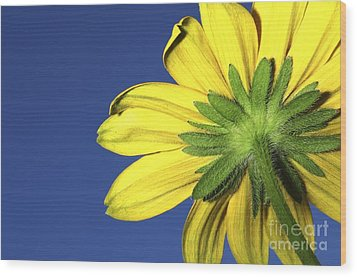 Wood Print featuring the photograph Facing The Sun by Sherry Davis