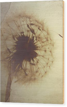 Fading Wish Wood Print by Amy Tyler