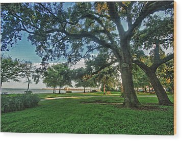 Fairhope Lower Park 4 Wood Print by Michael Thomas
