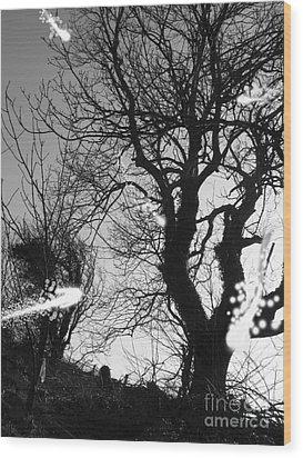 Fairies  Wood Print by Trevor Fellows