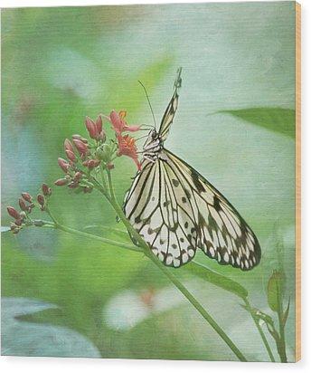 Fairy Dance Wood Print by Kim Hojnacki