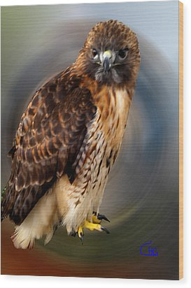 Falco 2 Tinnunculus Vf Wood Print by Colette V Hera  Guggenheim