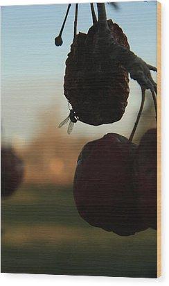 Fall Apples Wood Print