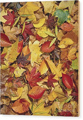 Fall  Autumn Leaves Wood Print