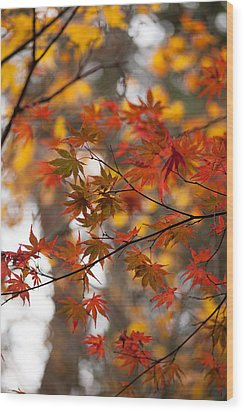 Fall Color Montage Wood Print by Mike Reid
