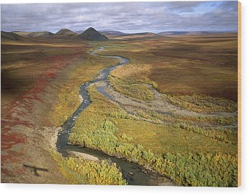 Fall Color On The Central North Slope Wood Print by Joel Sartore