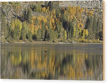 Fall Color Reflection And Tree Wood Print by Rich Reid