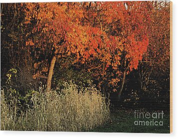 Wood Print featuring the photograph Fall Colors 2 by Vilas Malankar
