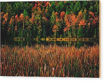 Fall Colors Wood Print by Andre Faubert