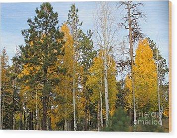 Fall Colors Aspen Wood Print by Pamela Walrath