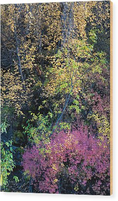 Wood Print featuring the photograph Fall Colors by Gary Rose