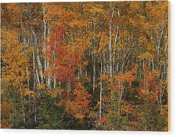 Fall Colors Grand Mesa Wood Print by Ernie Echols