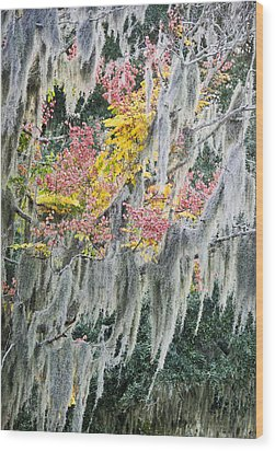 Fall Colors In Spanish Moss Wood Print by Carolyn Marshall