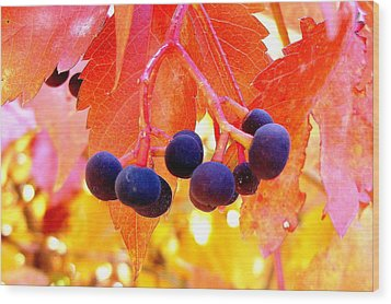 Fall Colors Wood Print by Marilyn Magee