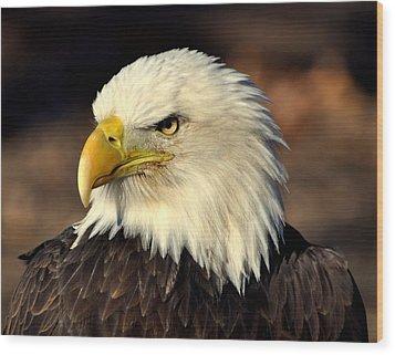 Fall Eagle 4 Wood Print by Marty Koch