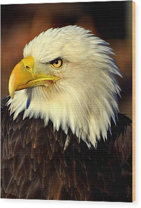Fall Eagle 5 Wood Print by Marty Koch