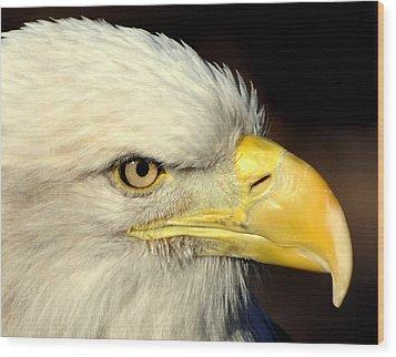 Fall Eagle  Wood Print by Marty Koch